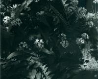 Forrest-Plants_LR-