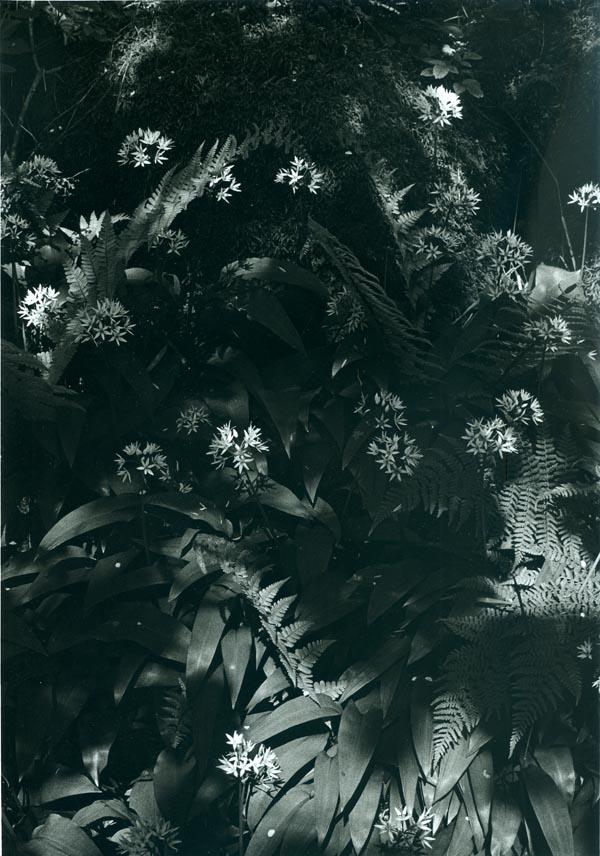 Forrest Plants_web