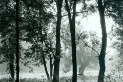 woodland_trees