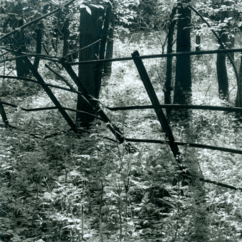 woodland_iron_railings
