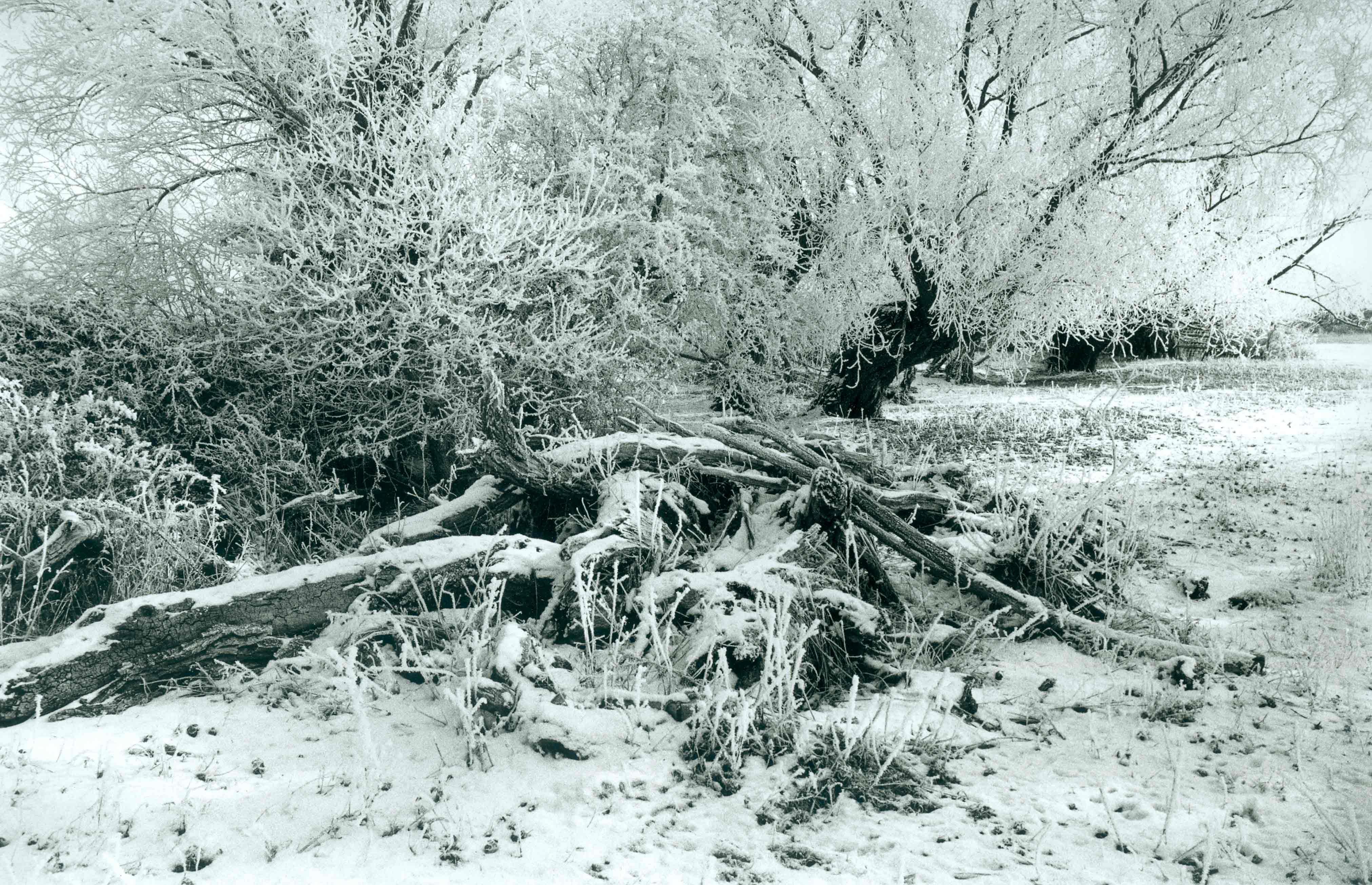 Landscape_Frost