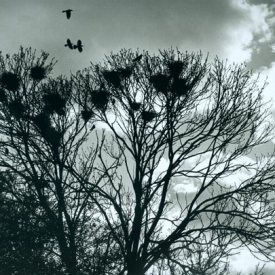 Crows_web-1