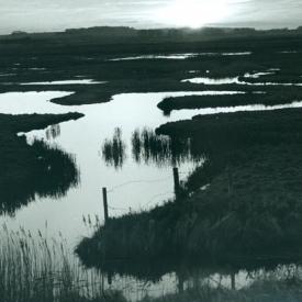 Marsh_web-