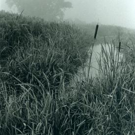Reeds_LR